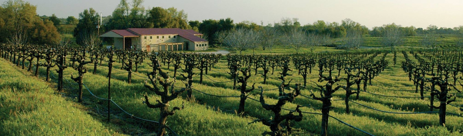 Amador County Wine Tours Sausalito