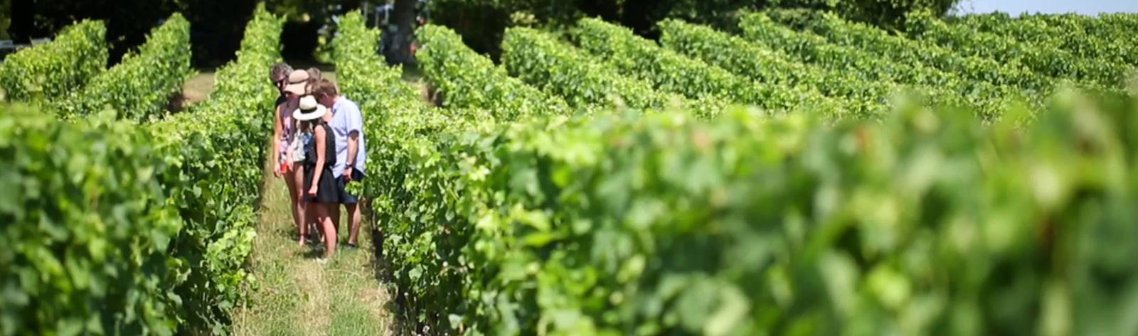 Wine Tours Limo Service Sausalito